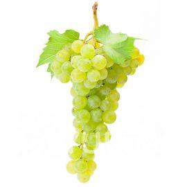 Viță de vie Chardonnay în ghiveci de 2 L