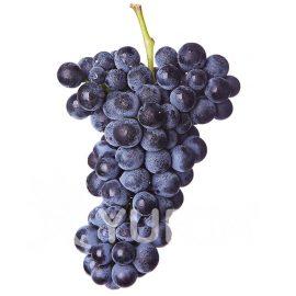 Viță de vie Pinot Noir