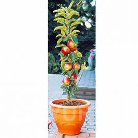 Măr columnar Traian