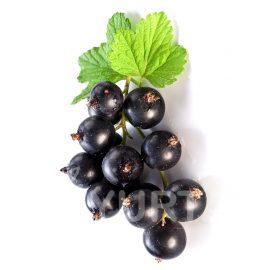 Coacăz negru Abanos