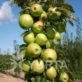 Măr columnar Tuscan