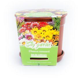 Set de cultivare – Floarea comoară