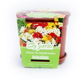 Set de cultivare Flori – Floarea Măcăleandru