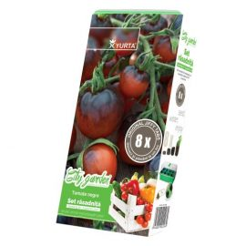 tomate negre