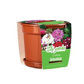 Set de cultivare Flori – Verbena Nana mixt