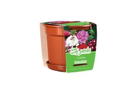 Flori – Verbena Nana mixt