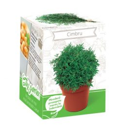 Kit plante aromatice – Cimbru