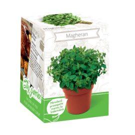 Kit plante aromatice – Magheran