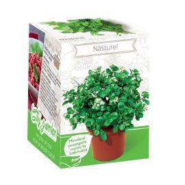 Kit plante aromatice – Năsturel