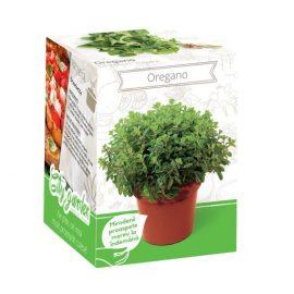 Kit plante aromatice – Oregano