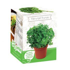 Kit plante aromatice – Pătrunjel frunza netedă