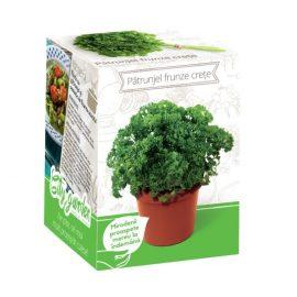 Kit plante aromatice – Pătrunjel frunze crețe
