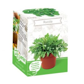 Kit plante aromatice – Rucola
