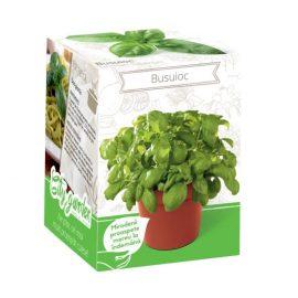 Kit plante aromatice – Busuioc