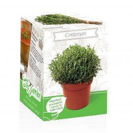Kit plante aromatice – Cimbrișor
