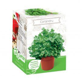 Kit plante aromatice – Coriandru