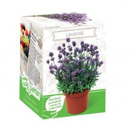 Kit plante aromatice – Lavandă