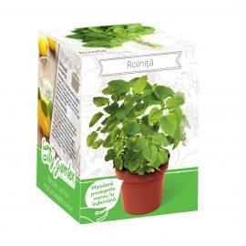 Kit plante aromatice – Roiniță