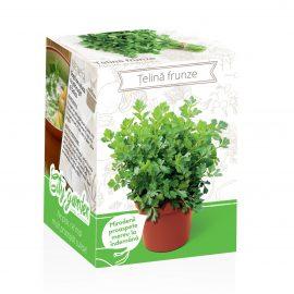 Kit plante aromatice – Țelină frunze