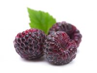 Zmeur negru Rubus occidentalis black raspberry