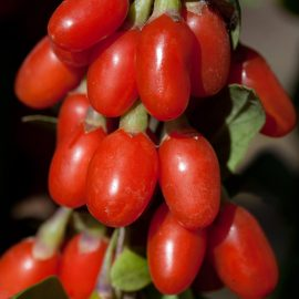 "Goji ""Big Berry"""