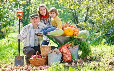 Grădinăritul,  terapie antistres