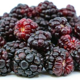 Mur Californian Boysenberry