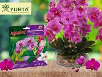 Îngrijirea orhideelor