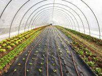 Beneficiile cultivării plantelor în sere de grădină