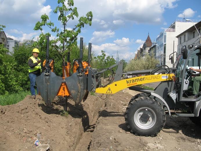 Imagini pentru transplantare arbori