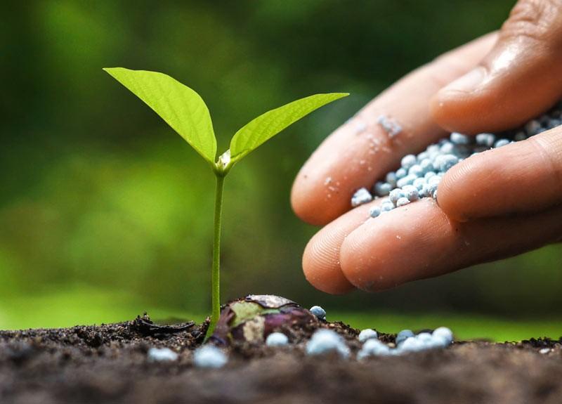 Imagini pentru fertilizare pomi