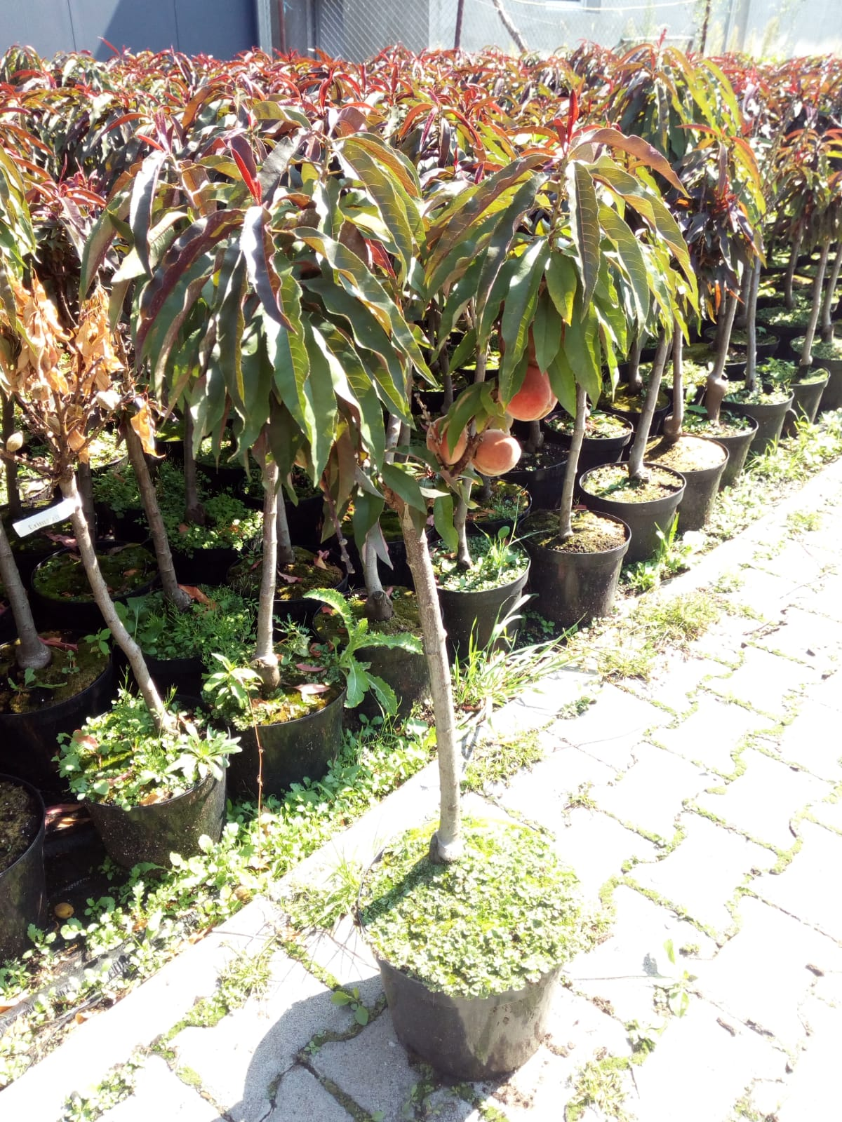 Plante în fază vegetativă