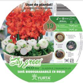 Tavă biodegradabilă cu gladiole și ranunculus