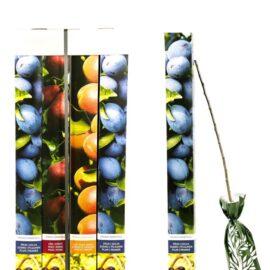 Mix pomi fructiferi 12 buc