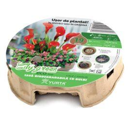 Tavă biodegradabilă cu cale roșii și anemone roșii