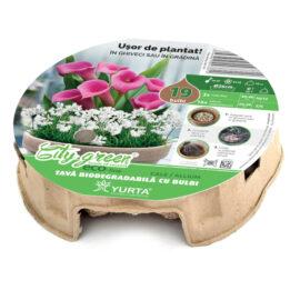 Tavă biodegradabilă cu cale roz și ranunculus alb