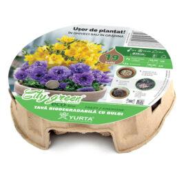 Tavă biodegradabilă cu frezia galbene și gladiole albastre