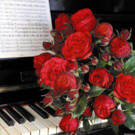 """Trandafir nobil la ghiveci 2 L """"Piano"""""""